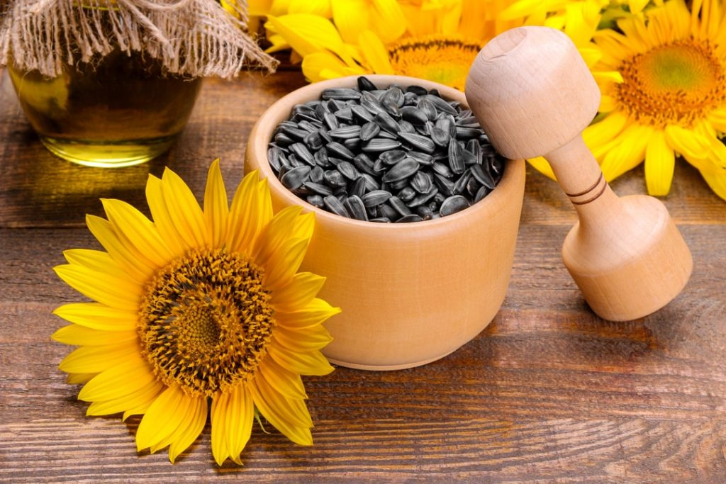 Sunflower seeds and flower for CBD Protein Powder